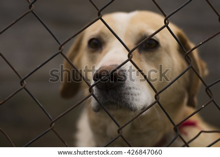 Lonely Caged Dogs, Canines, Neglect, Abuse, exile - stock photo