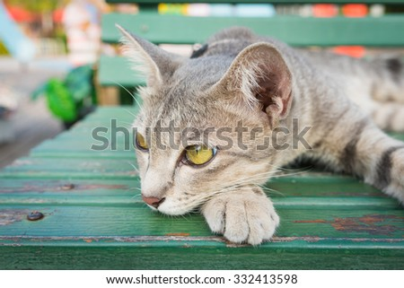 Lonely cat alone on a bench in the park. - stock photo