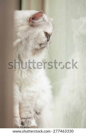 lonely cat beside the window on rainy day
