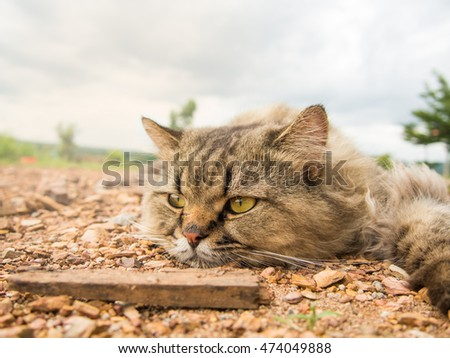 Lonely cat  in the ground