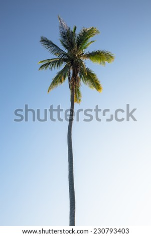Lonely coconut tree under blue sky