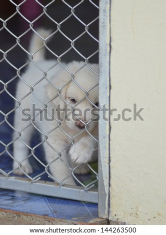lonely dog in cage - stock photo