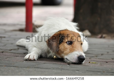 Lonely dog laying on the street. - stock photo