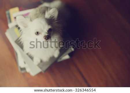 Lonely dog sit on books. This photo is cross process style. - stock photo