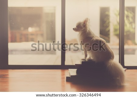 Lonely dog sit on books. This photo process is sepia style. - stock photo