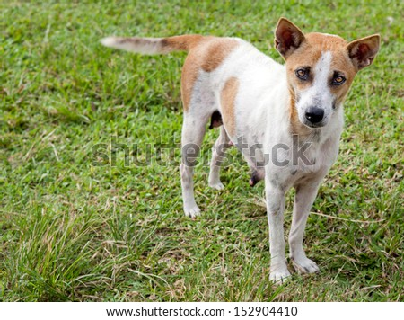 Lonely Dog standing fawning with curious face