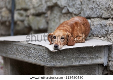 Lonely dog waiting for its owner - stock photo