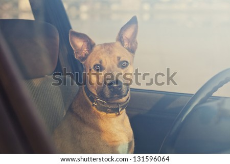 Lonely dog waiting in the car - stock photo