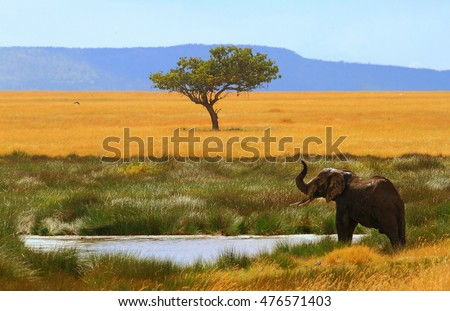 lonely elephant in the savanna