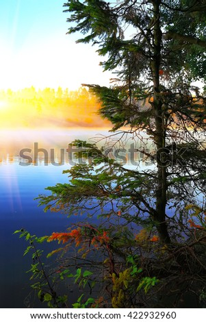 Lonely fir tree growing in a pond at sunrise. blue sky - stock photo