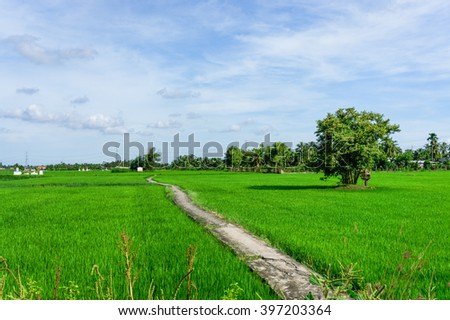 Lonely footpath in field  - stock photo
