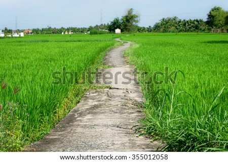 Lonely footpath in the field  - stock photo
