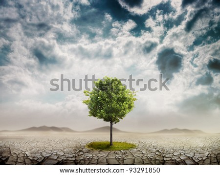 Lonely green tree in the desert - stock photo