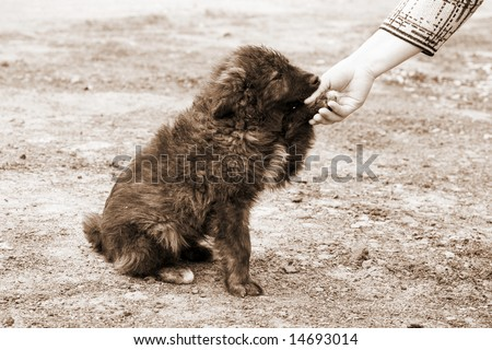 lonely homeless dog and helping human hand - stock photo