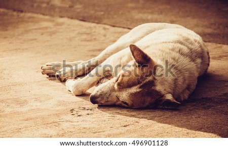 Lonely homeless dog sleeping on the sidewalk