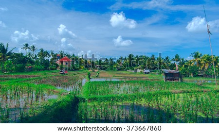Lonely house on sunny rice field at the town of Ubud in Bali in summer day - stock photo