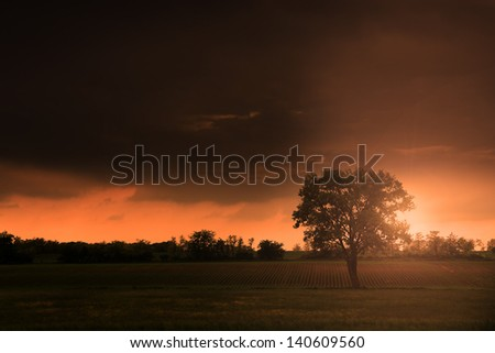 Lonely huge tree in sunset with ray of sunshine