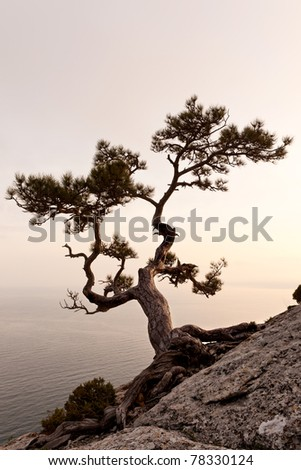 Lonely juniper tree at sunset. Crimea, Ukraine