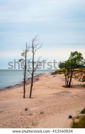 Lonely leafless tree against of endless sea under overcast sky, Latvia - stock photo