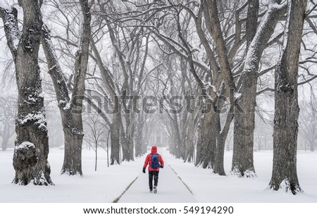 lonely male figure walking in a blizzard - alley of old elm trees - historical Oval at Colorado State University campus, Fort Collins
