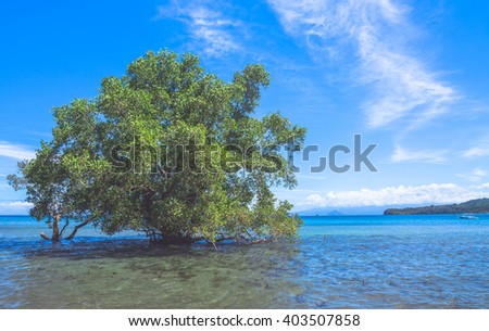 Lonely mangrove tree growing in the sea. Bohol island, Philippines.