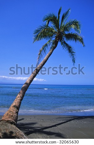 Lonely Palm on Beach