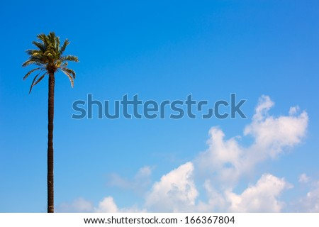 Lonely palm tree Washingtonia California style on blue sky and clouds - stock photo