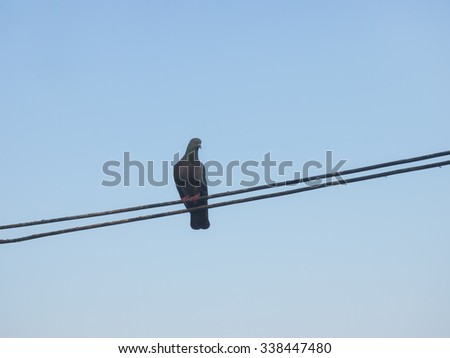 Lonely pigeon under blue sky - stock photo