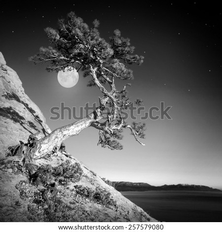 Lonely pine tree in the sunset light with a rising moon on the east. Monochrome colors - stock photo