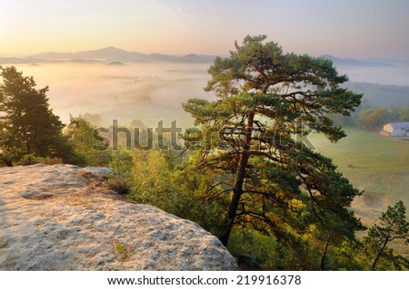 Lonely pine tree on the sandstone rock above the misty valley in national park Bohemian Switzerland