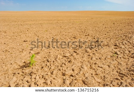 lonely plant on empty field of tilled land