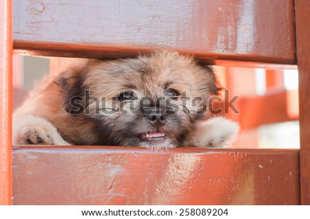 Lonely puppy dog - stock photo