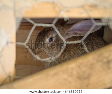 Lonely rabbit in its cage