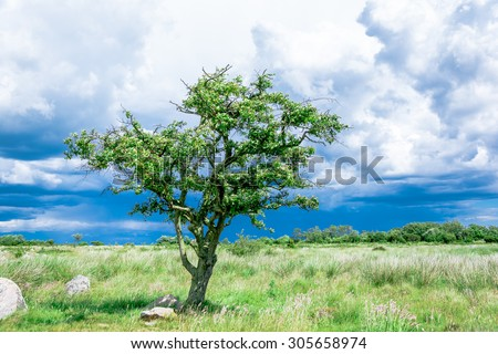 lonely single tree on the meadow before the storm - stock photo