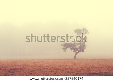 Lonely solitary tree in an open grassy field meadow pasture in the fog looking empty dismal depressing desolate bleak stark grim dramatic moody drab dim dull - stock photo