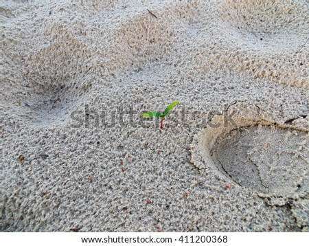 Lonely sprig on a sand - stock photo