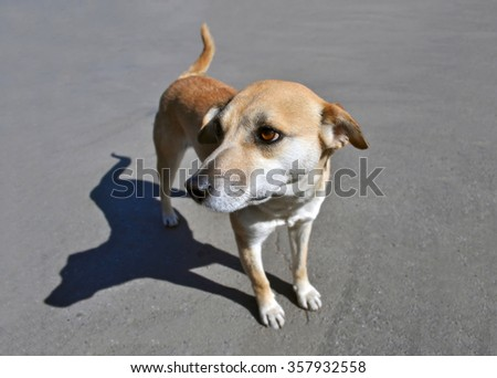 lonely stray dog standing on the pavement and looks - stock photo