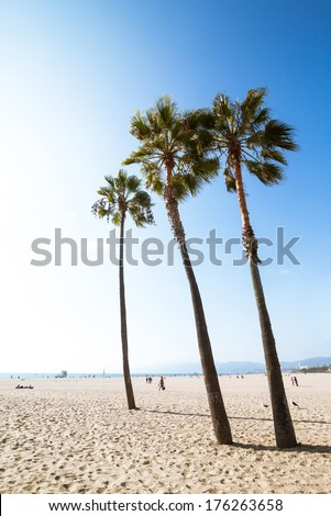 Lonely three palms at empty paradise Venice Beach during sunrise - stock photo