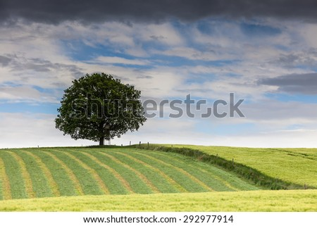 lonely tree - stock photo