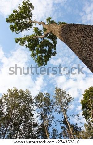 Lonely tree against a blue sky - stock photo