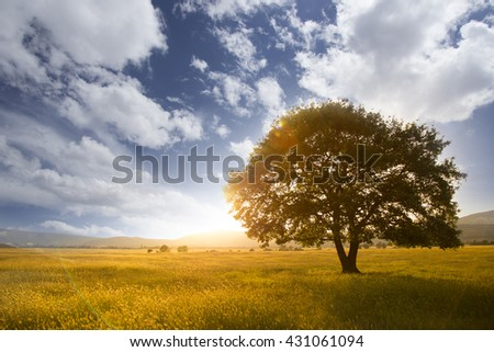 Lonely tree against a blue sky at sunset. summer landscape with a lone tree at sunset barley field in the village - stock photo