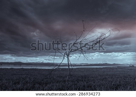 Lonely tree. Art nature