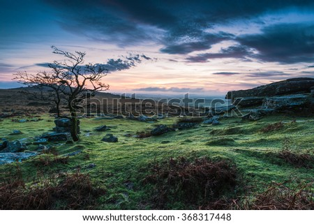 Lonely tree at dramatic sunset in Dartmoor Park, UK - stock photo