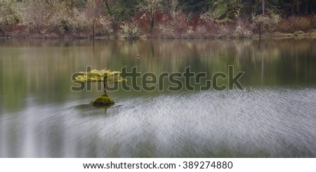 Lonely Tree at Fairy Lake near Port Renfrew, BC, Vancouver Island, Canada. Calm and peaceful scene - stock photo