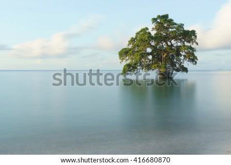 lonely tree at the middle of serene calm seawater taken with long exposure dreamy looks picture. - stock photo