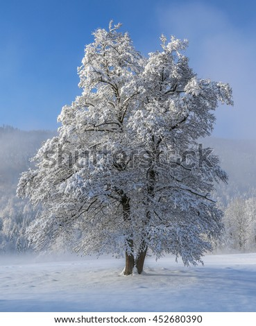 Lonely tree covered into snow snow idyll blue sky winter landscape - stock photo