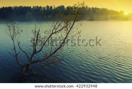 Lonely tree growing in a pond at sunrise. Dramatic silhouette. Fog over water - stock photo