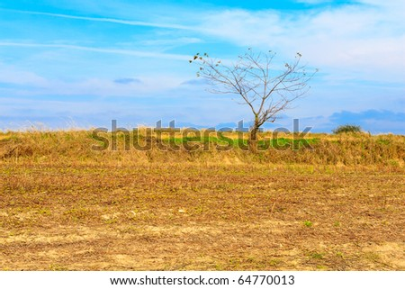 Lonely tree growing on a field, blue sky with clouds in a background - stock photo