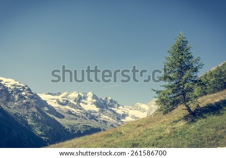 Lonely tree growing on a mountain meadow. Grand Paradiso National Park, Italy. - stock photo