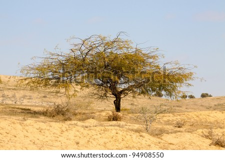 Lonely tree in a desert - stock photo